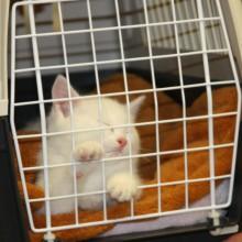 Baby Katze Kleintierpraxis Utiger 8046 Zürich Affoltern