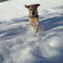 Labrador, Kleintierpraxis Utiger