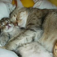 Hauskatzen, Kleintierpraxis Utiger