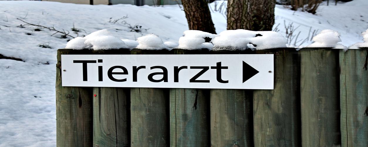Kleintierpraxis Utiger 8046 Zürich Affoltern